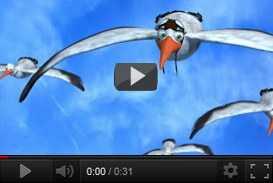 Cicogne: il volo in stereoscopia 3d delle signore dei cieli   Regione Lombardia (2009) | dvd  | Video Industriali | Filmati Aziendali | Giuseppe Galliano Multimedia Studio |