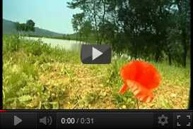 La terra delluomo   Al.Zoo.Bio (2002) | documentari  | Video Industriali | Filmati Aziendali | Giuseppe Galliano Multimedia Studio |