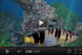 Sistema Proiezione 3d Parco Nazionale Cinque Terre (2007) | produzioni varie  | Video Industriali | Filmati Aziendali | Giuseppe Galliano Multimedia Studio |
